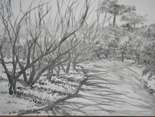 Árvores-5
