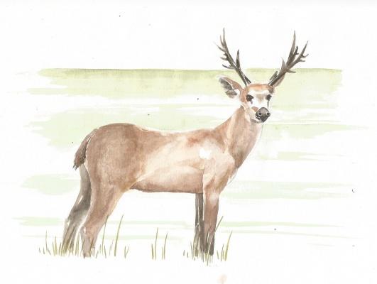 5.-Cervo-do-pantanal
